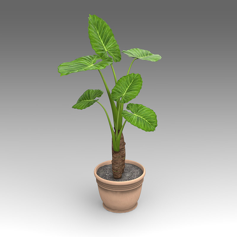 house_plants_hpa_007_Philodendron_01.jpg