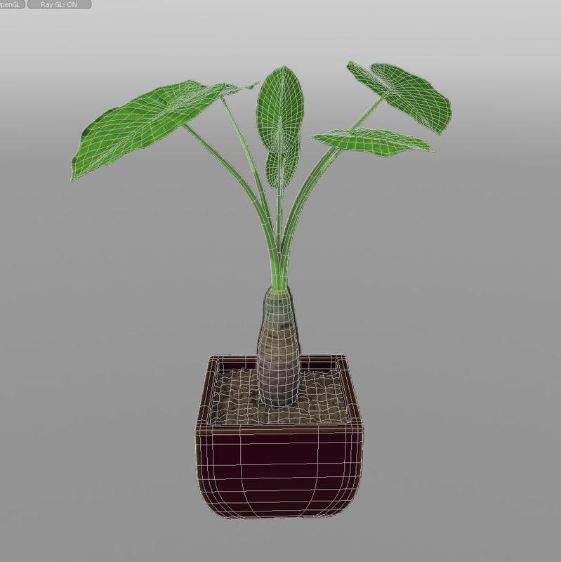 House_Plants_hpa_012_Alocasia_calidora_03.jpg