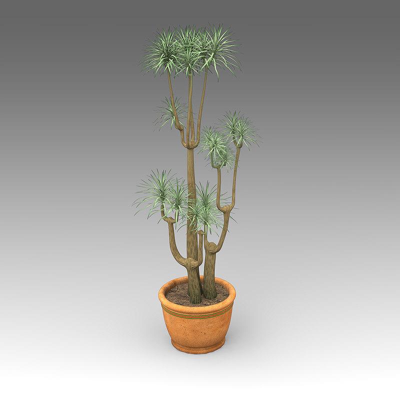 House_Plants_hpa_014_Dracaenea_Marginata_01.JPG