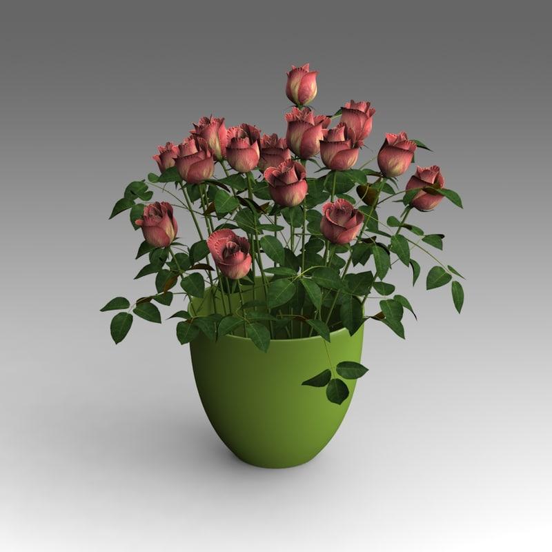 House_Plants_hpa_024_01.JPG