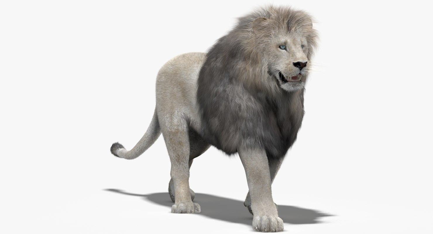 Lion-3d-model-fur-rigged-animated-01.jpg