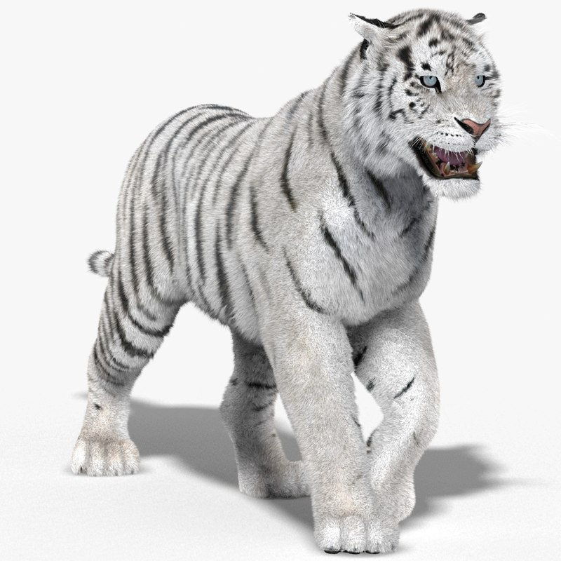 Tiger-3D-model-animated-fur-00.jpg