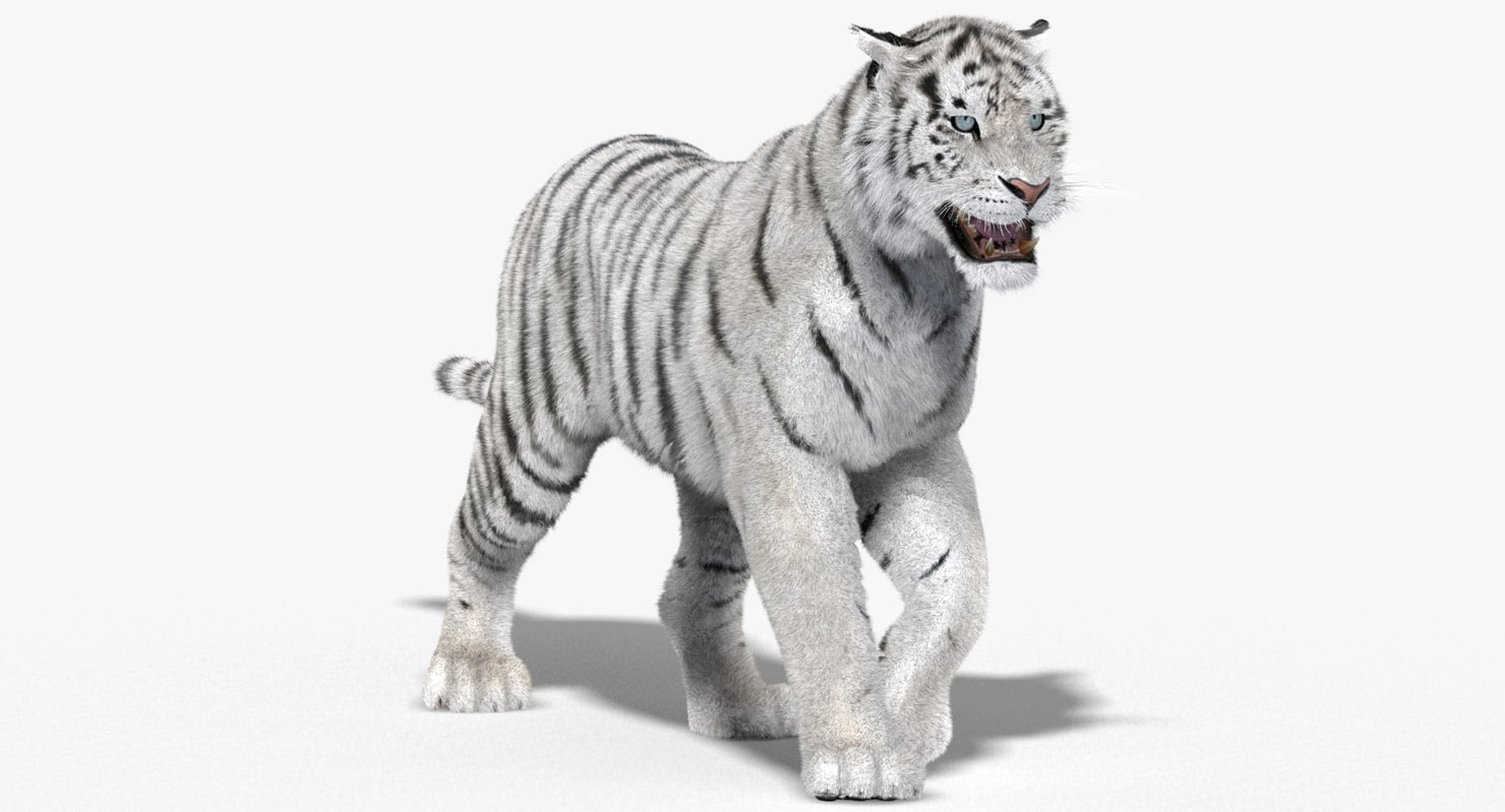 Tiger-3D-model-animated-fur-01.jpg