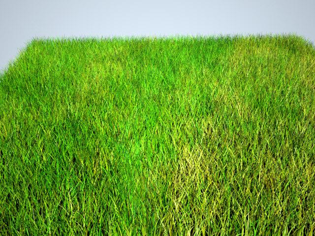 grass rend.jpg