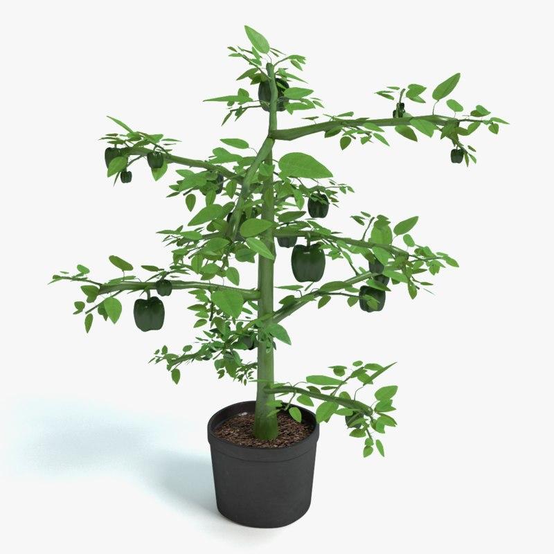 bell pepper plant 3d model