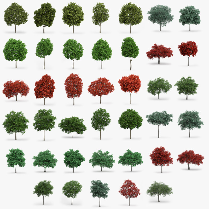 40-trees.jpg
