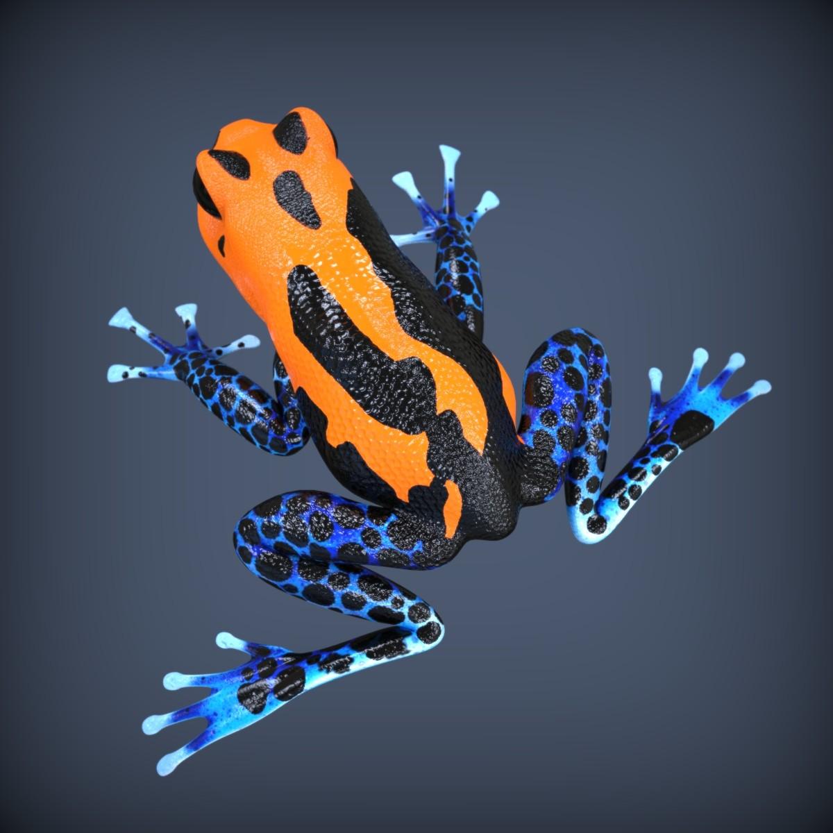 Frog.122.jpg