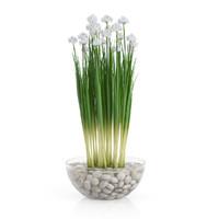 Ranunculus 3D models