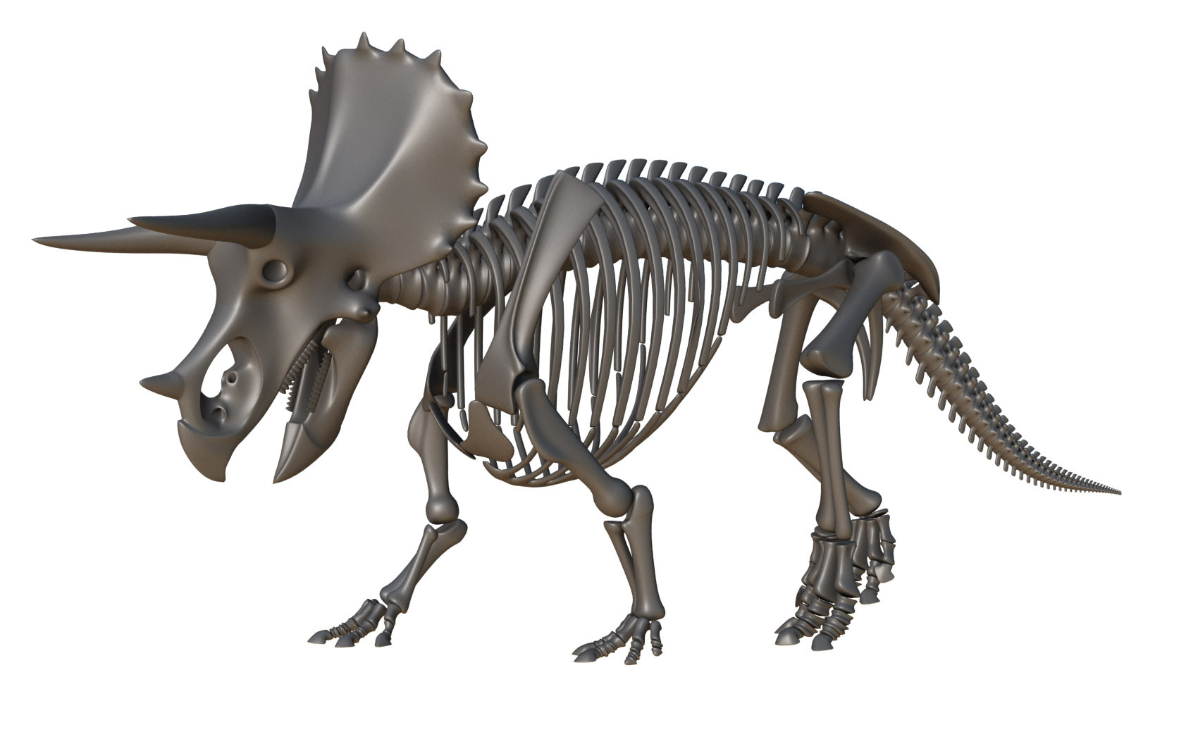 triceritopSkeletonRender.jpg