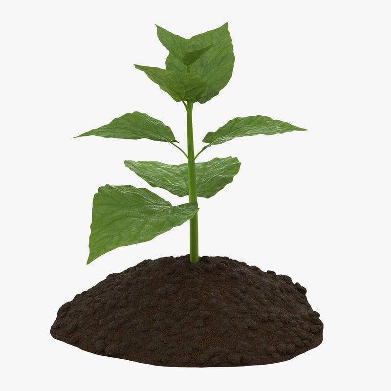 Plant_Thumbnail_Square_0000.jpg