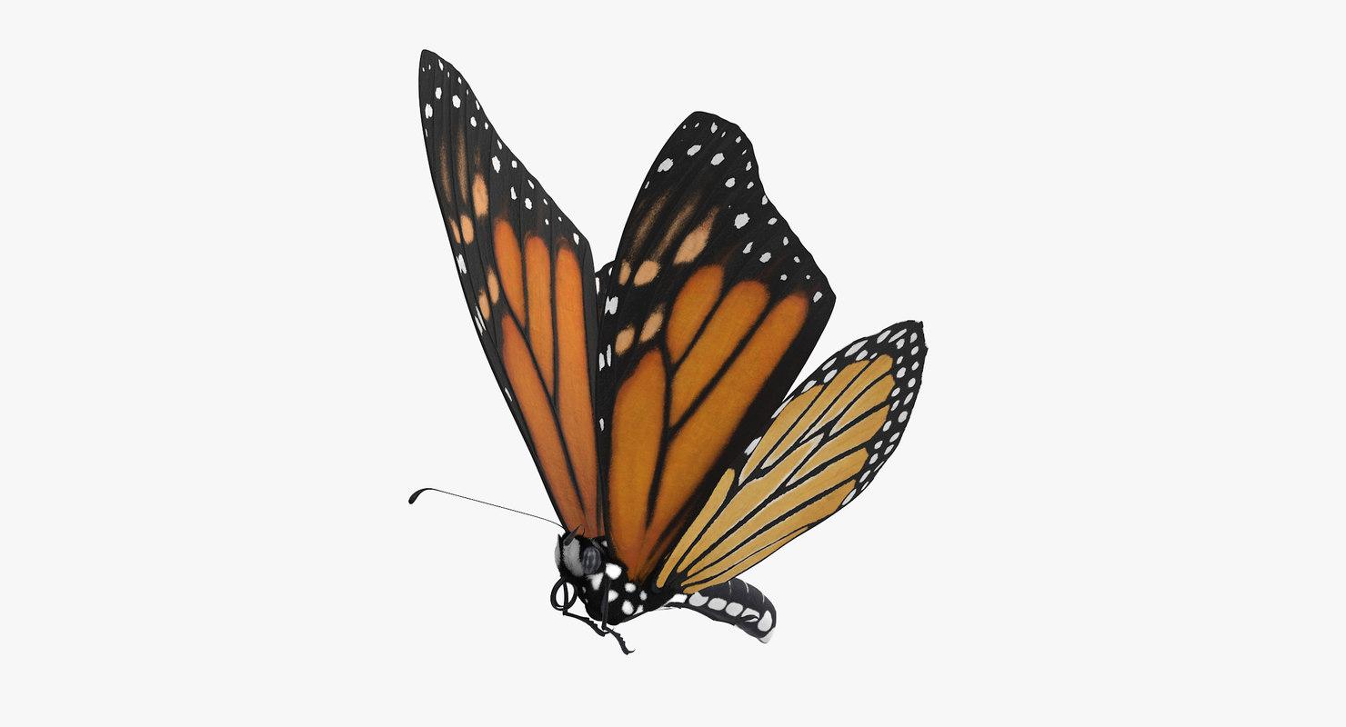 3d monarch butterfly flying