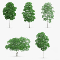 white birch 3D models