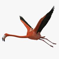 Flamingo 3D models