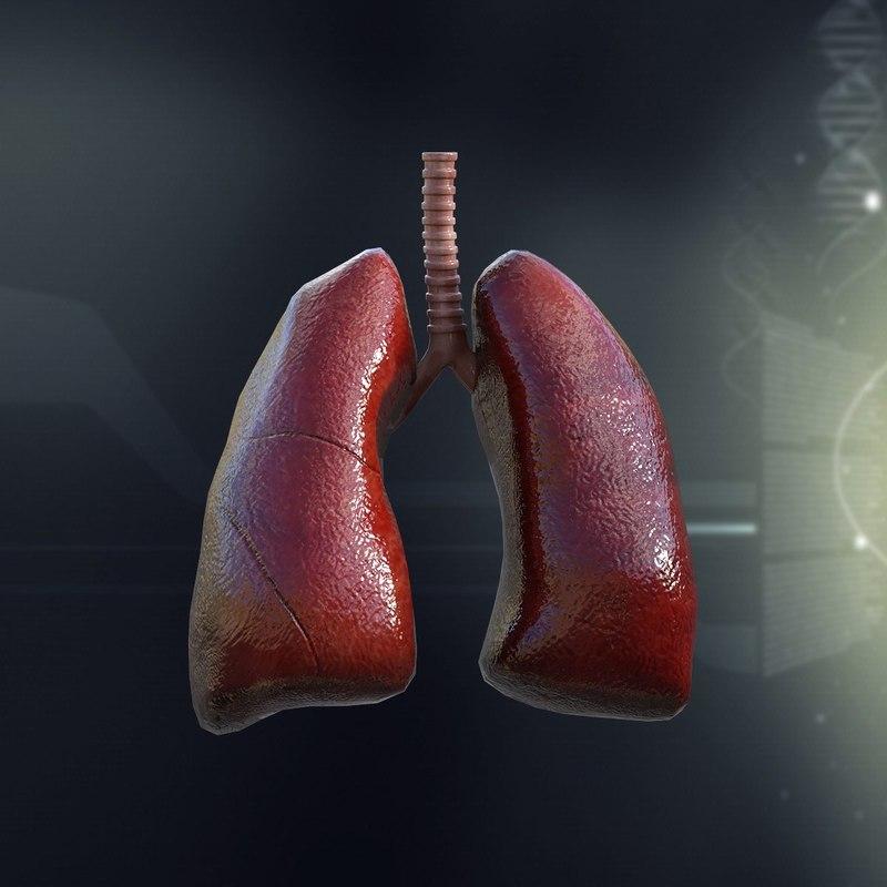 human_lungs_anatomy_3d_model_c4d_max_obj_fbx_ma_lwo_3ds_3dm_stl_1295089_o.jpg