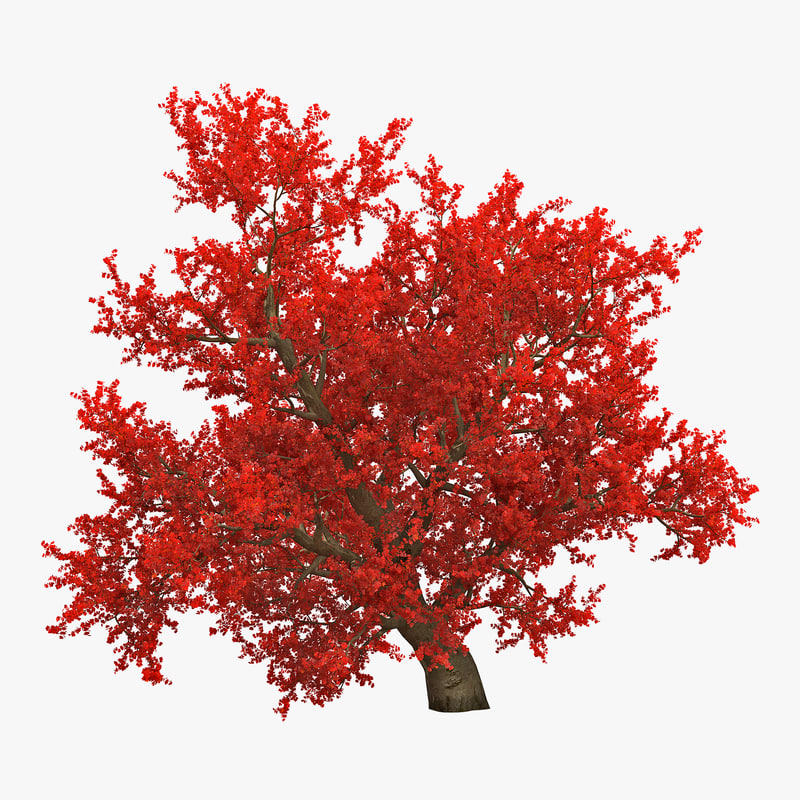 Old Red Maple Tree Autumn 3d model 00.jpg