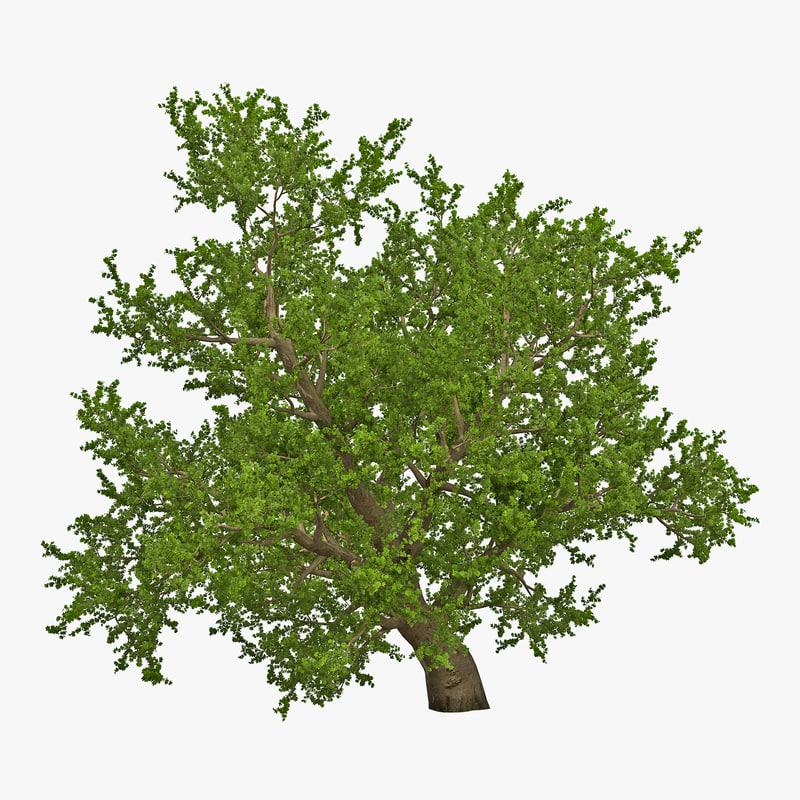 Old Red Maple Tree Summer 3d model 00.jpg