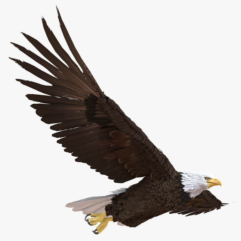 bald eagle render by - photo #22