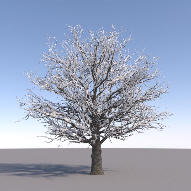 Oak1_Winter_TT_026.jpg