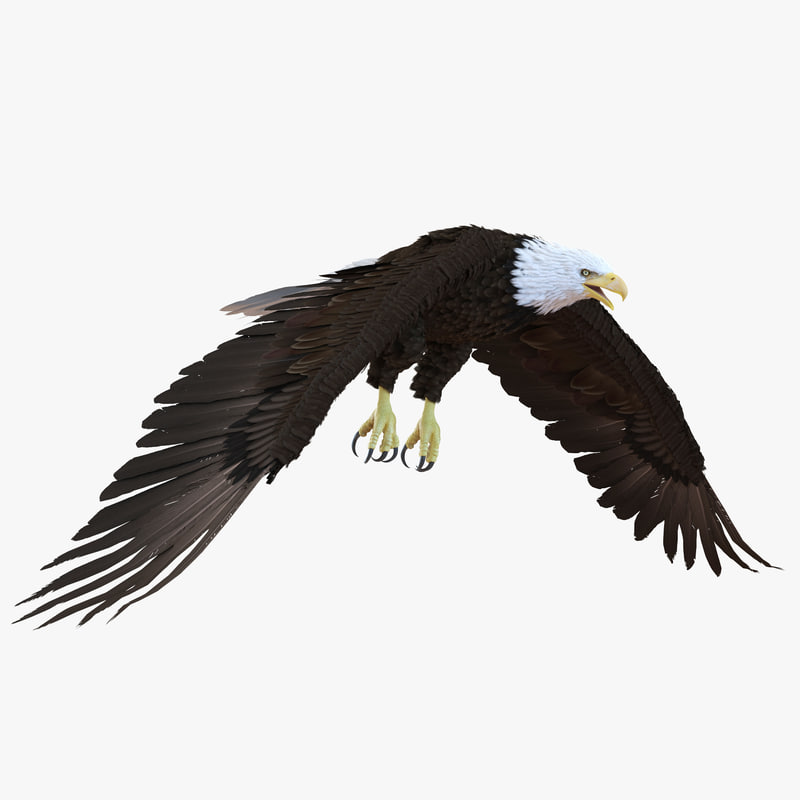 bald eagle render by - photo #8