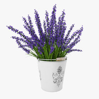 English lavender 3D models