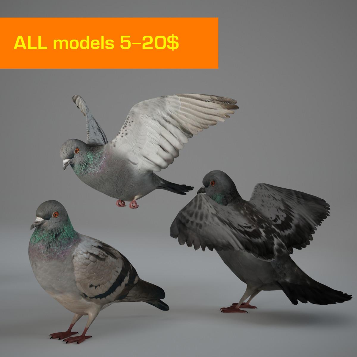 pigeon-00001.jpg