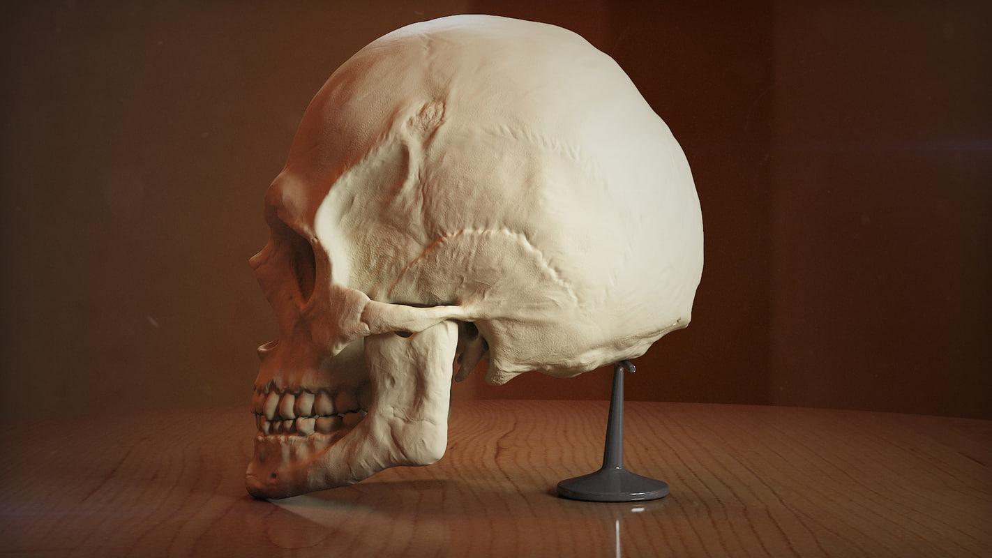 Skull-A-export-07.jpg