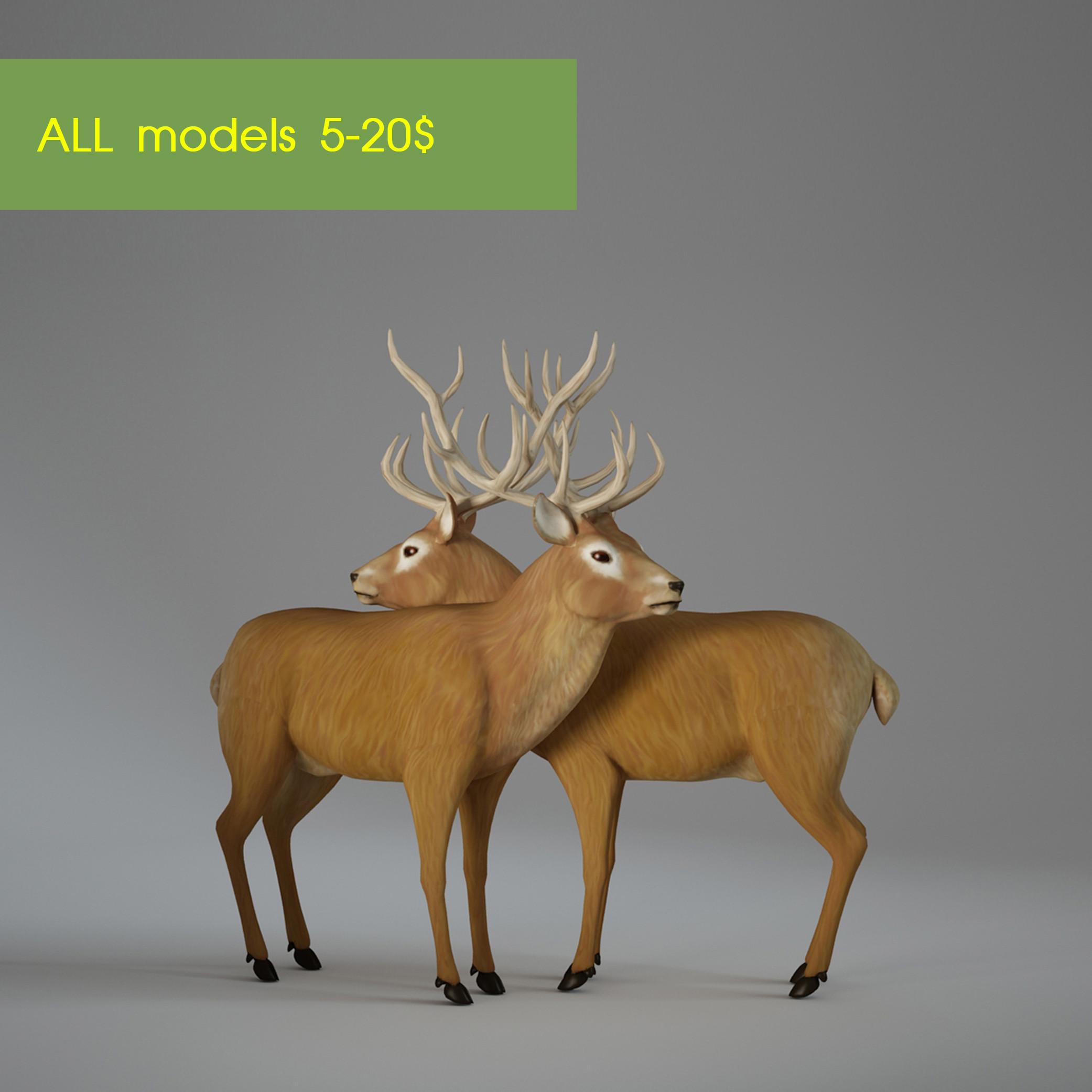 deer0001-01.jpg