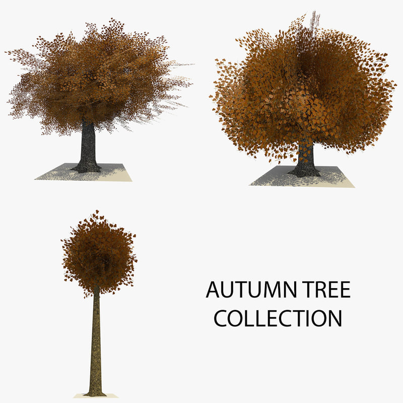 AUTUMN TREE COLLECTION FRONT.jpg