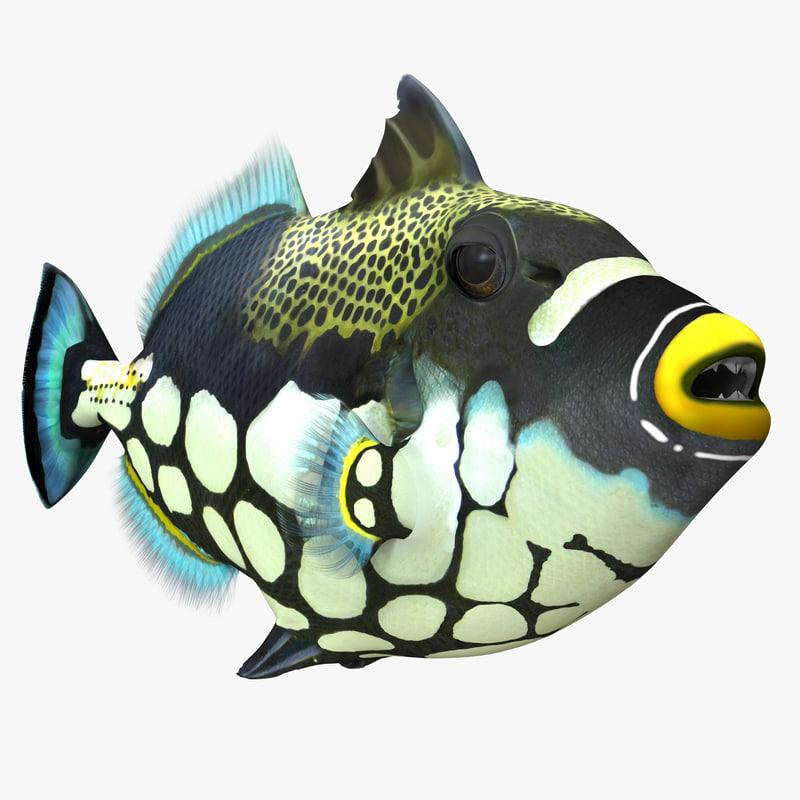 Clown Trigger Fish 3d model 01.jpg