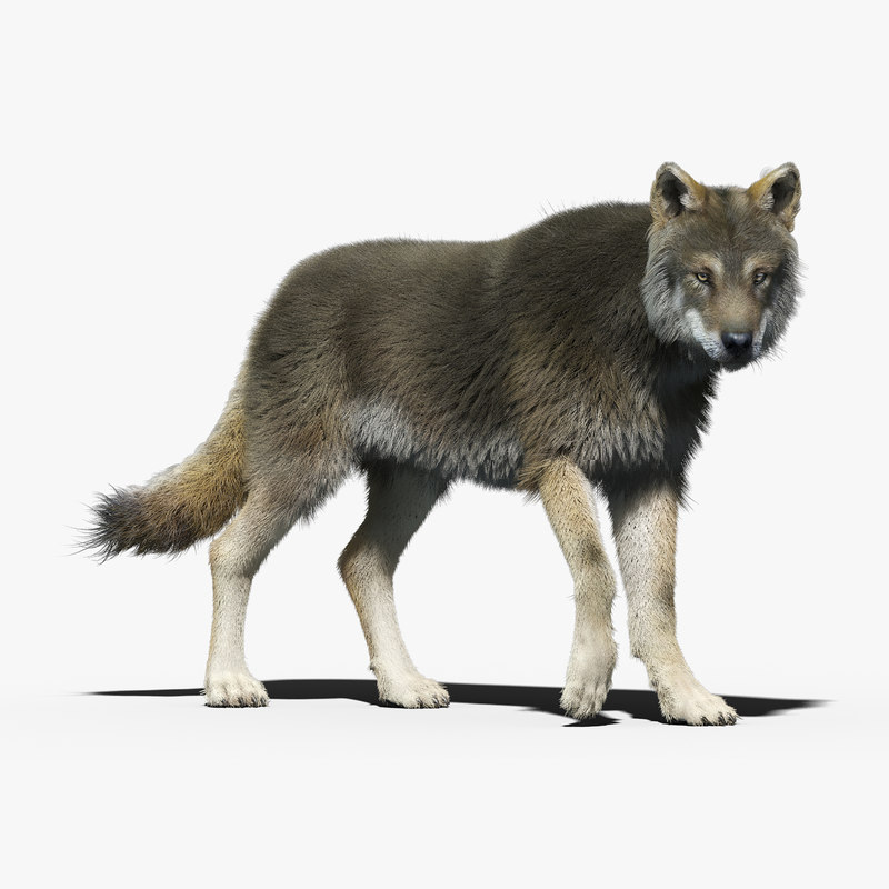 wolf_ornatrix_01.jpg