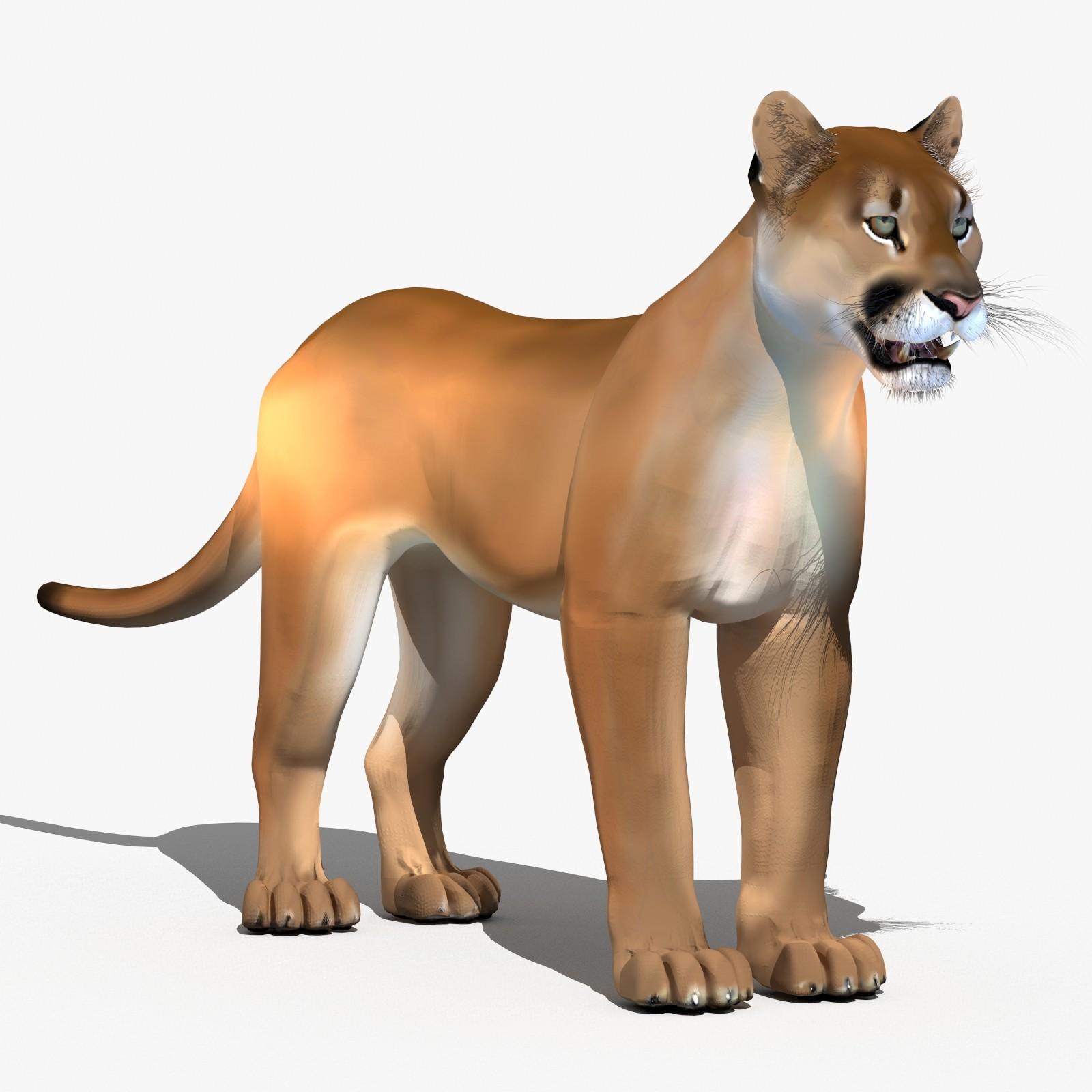Cougar-3D-model-fur-00.jpg