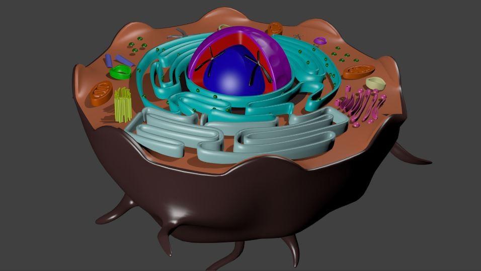 Animal Cell.JPG