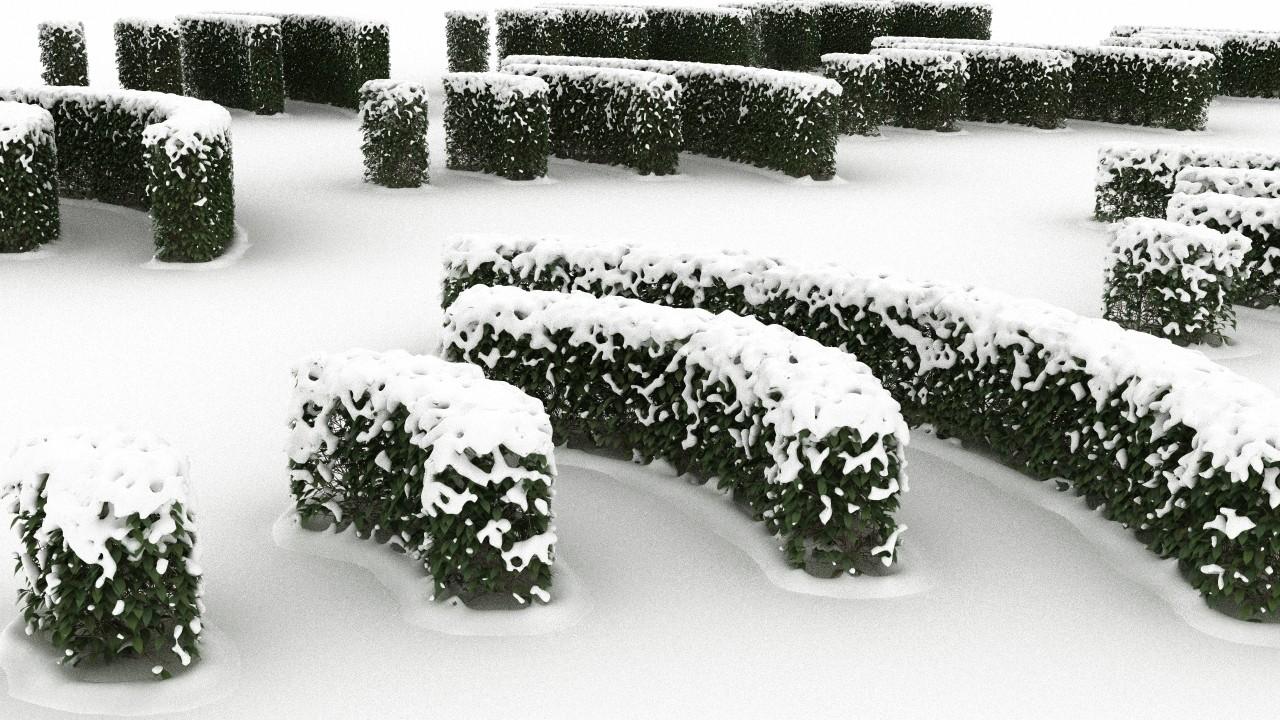 snowyhedge1.jpg