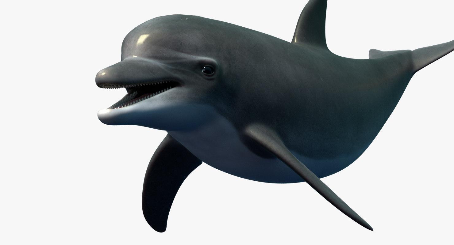 dolphin_shots_a00000.jpg