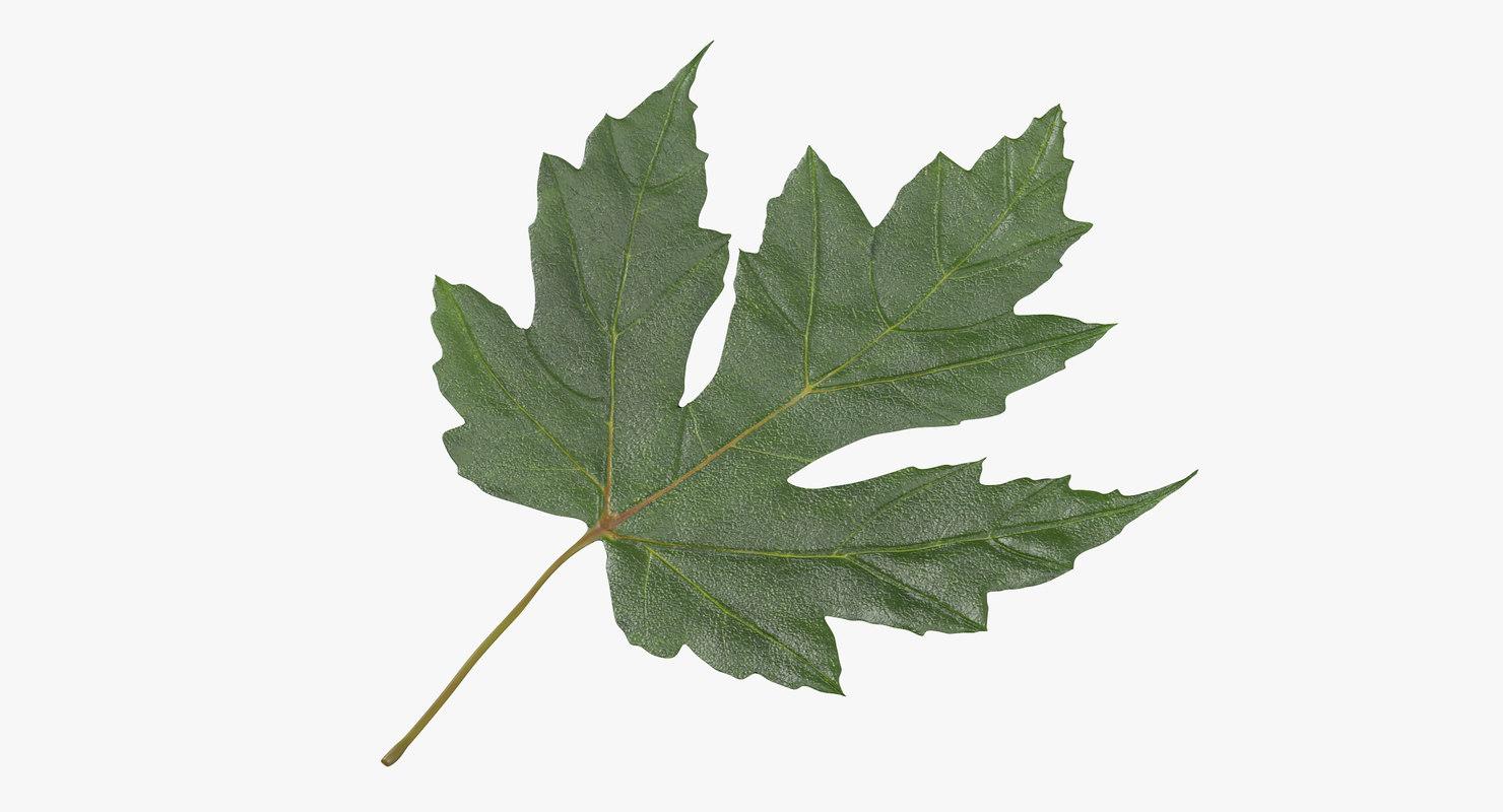 Maple_Leaf_01_Green_Thumbnail_0000.jpg
