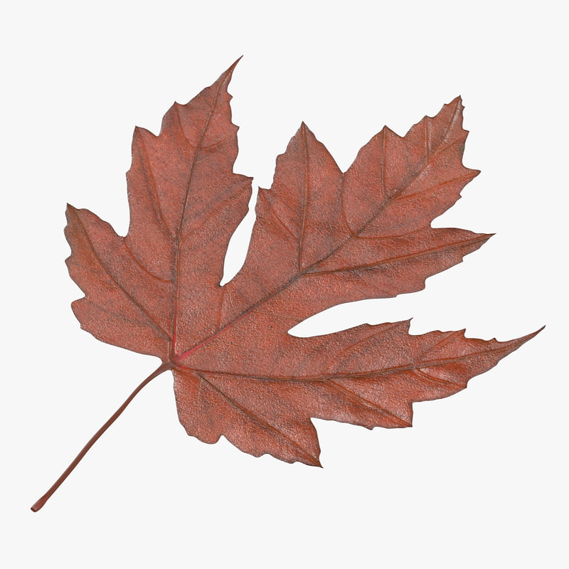 Maple_Leaf_01_Thumbnail_Square_Orange_0000.jpg