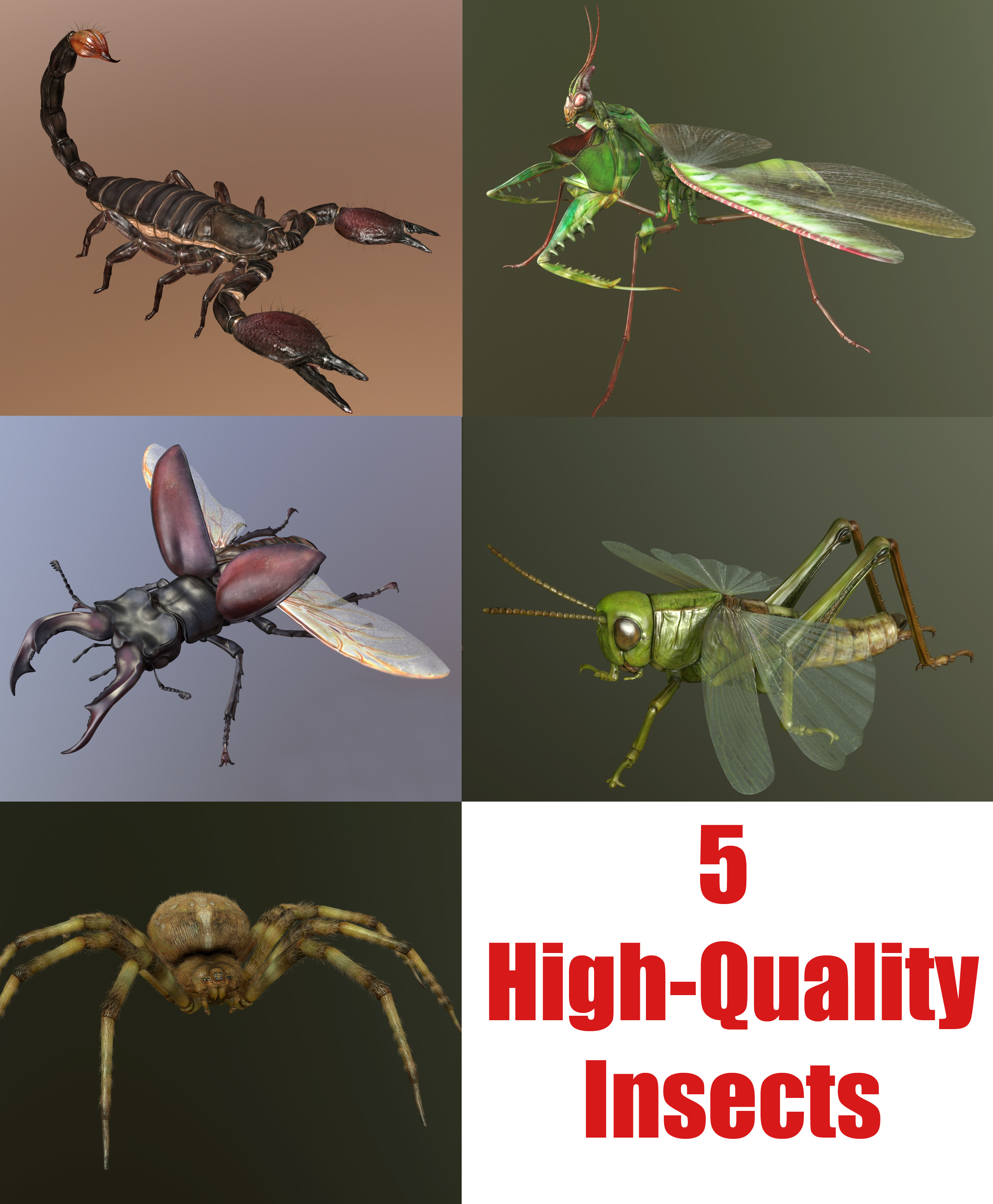 Insect_Collection_1.png