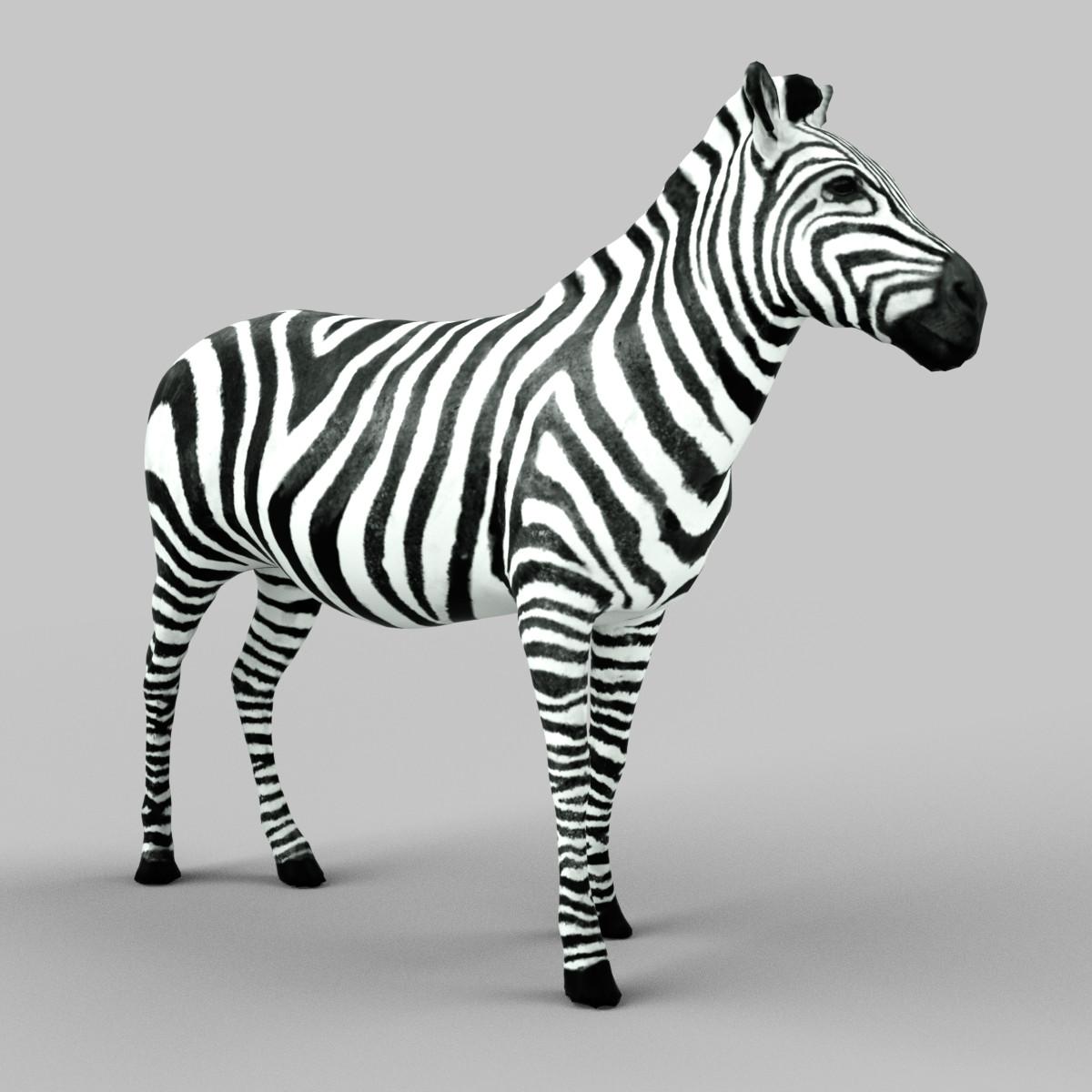 _0100_Zebra-1.png