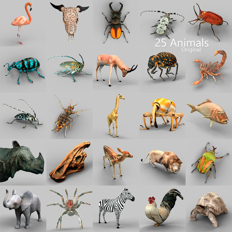 Animals-Collection-Original.jpg