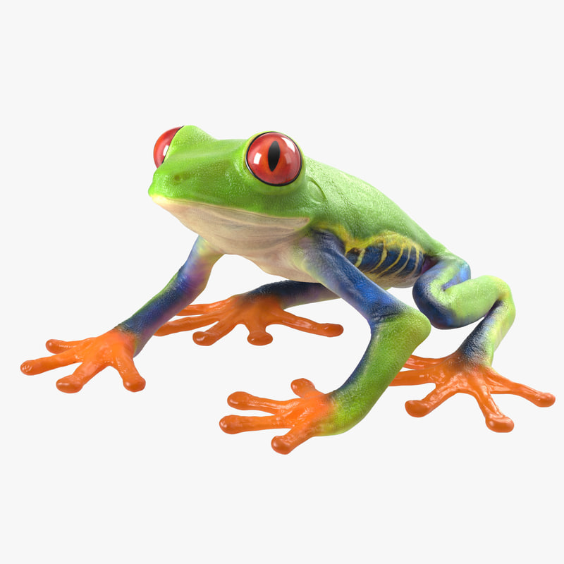 3d red eyed tree frog model for Frog software