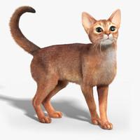 Abyssinian Cat 3D models