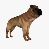 Shar Pei 3D models