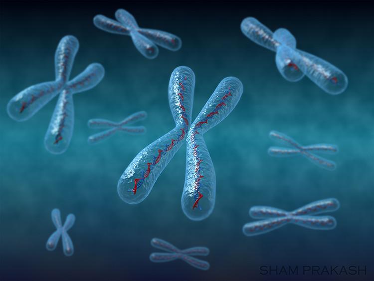 Chromosome01.jpg