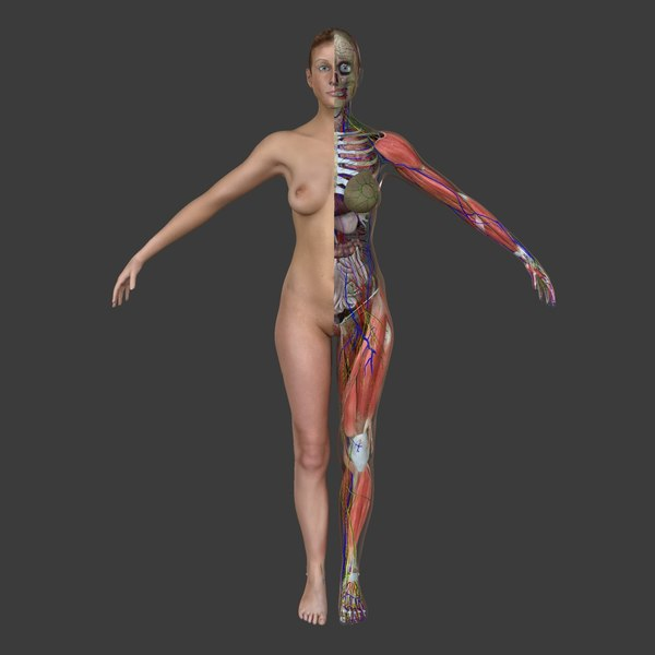 Ultimate Complete Female Anatomy 3D Models