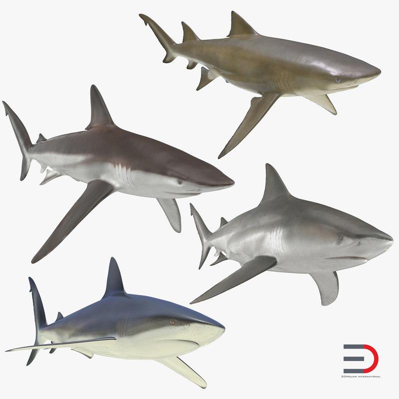 3d models of Sharks Collection 000.jpg