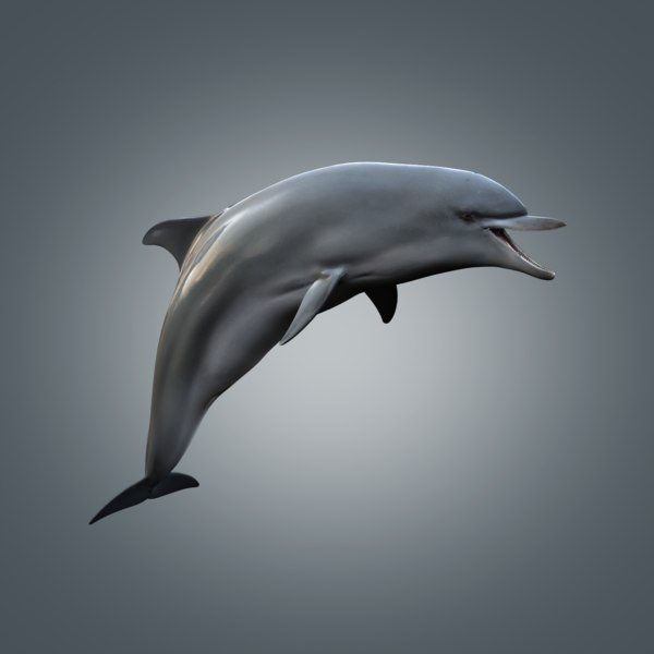 Dolphin Rigged 3D Models