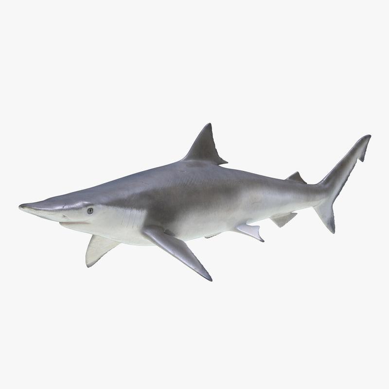 Spadenose Shark 3d model 00.jpg
