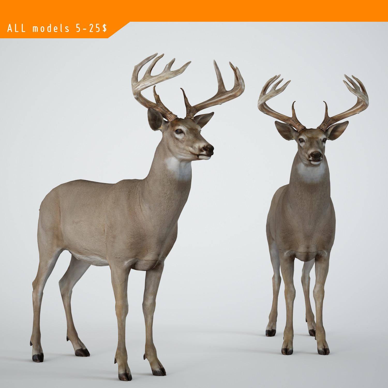 deer-0000000.jpg