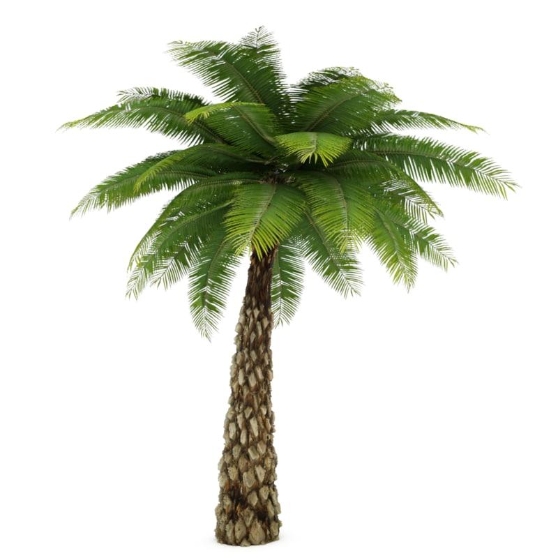 palmtree0000.png