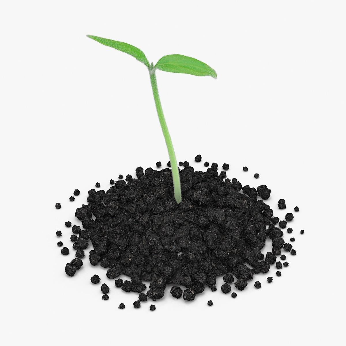 Plant_Sprout_05_SQRSignature_0000.jpg